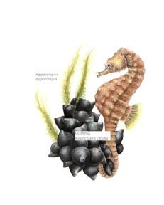 H. hippocampus_Terminado retocado sin fondo_089