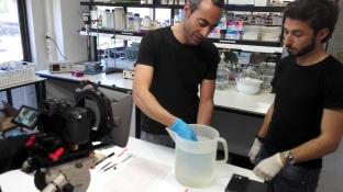 Muestreo en laboratorio